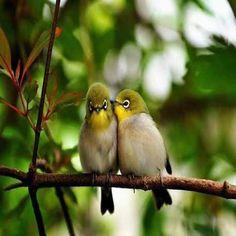 الطيور عندما تغرد على غصن معين ليس لأنها تحبه  لكنها وجدت فيه الأمان ..   فكن أنت ذلك الغصن الآمن والملجأ لكل من حولك.