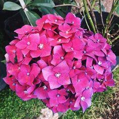 18 plantas cubresuelos con flor