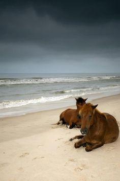Wild Horses - Cape Hatteras NC by ala Santellana