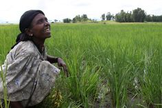 Female Rice Farmer: Asrese, one of the few female Ethiopian rice farmers, smiles among her growing crop. Go to www.sparkinggrowth.com to donate to the EDGET project (Ethiopians Driving Growth through Entrepreneurship and Trade).