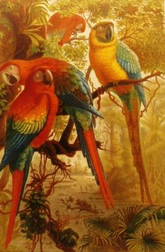 1880s Jungle Parrots Antique Bird Print