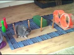 A great video of at home rabbit agility, taught via clicker training. The course is made of things you can find around the house!