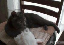 Katze setzt Häschenmütze auf