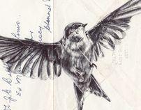Bic biro drawing on 1973 envelope. by mark powell, via Behance