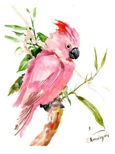 The Americanflat Suren Nersisyan Cockatoo Framed Wall Art will help you bring the beauty of the natural world into your home. Showcases a printed image of a colorful cockatoo sitting peacefully on a branch. Comes with a wood frame and ready to hang. Painting Edges, Painting Frames, Painting Prints, Art Prints, Watercolor Bird, Watercolor Paintings, Guache, Art And Illustration, Stretched Canvas Prints