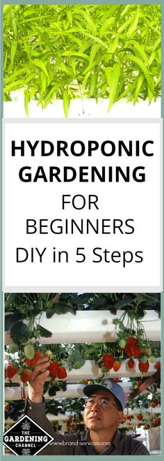 Hydroponic Gardening for Beginners. It's not as hard as you think. Follow this DIY guide and you will have a hydroponic garden in no time, even if you are a total beginner.
