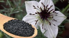 Chimenul, un condiment multipotent – De prin lume adunate Nigella, Salvia, Flora, Cancer, Health Fitness, Fruit, Medicine, Spring, Canning