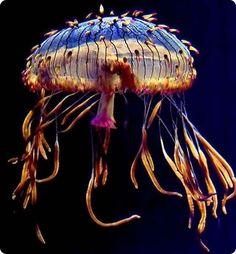 Jellyfish https://www.facebook.com/bythedart #Dartmouth