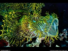 national geographic photo wallpaper - Google Search
