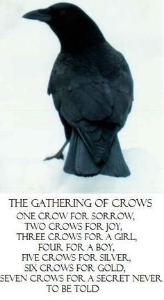 Crows Ravens:  Message from the #crows.