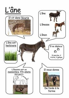 Ane - animaux de la ferme animals silly animals animal mashups animal printables majestic animals animals and pets funny hilarious animal French Teacher, Teaching French, How To Speak French, Learn French, French Education, French Classroom, French Resources, Farm Theme, Forest School