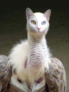 Montagem. Híbridos de gato com pássaro.