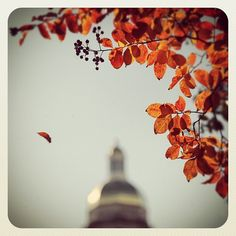 Fall at #Baylor. Via @bayloruniversity on Instagram.
