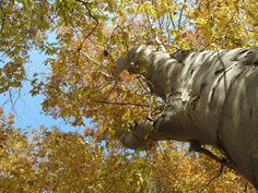 Majestic fall colors by lynn dombrowski, via Flickr