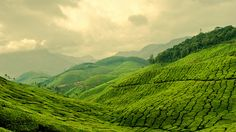I need to go here!! oh my word. Ever green, never blue - Munnar, India, Asia