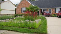 Rain garden year 2 Rain Garden, Shed, Outdoor Structures, Cabin, Year 2, House Styles, Building, Plants, Gardens