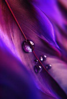 #Macro~Purple droplets - ©Krissy Katsimbras (via FineArt America)