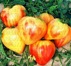100pcs/bag rare tomato seeds, rare tomato bonsai seed, bonsai organic vegetable & fruit seeds,potted plant for home &garden