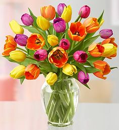 Assorted Tulips - just pictures...otherwise...a-a-a-choo!