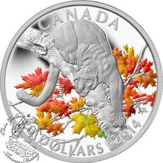 Coin Gallery London Store - Canada: 2014 $20 Cougar Perched on a Maple Tree Coloured Silver Coin, $99.95