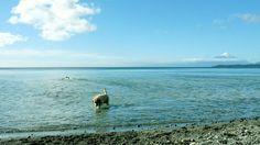 Bowsky at Bordemundo B Beach, Llanquihue Lake, Patagonia Patagonia, Crystal Clear Water, Organic Gardening, Countryside, Remote, Spaces, Adventure, Beach, Nature