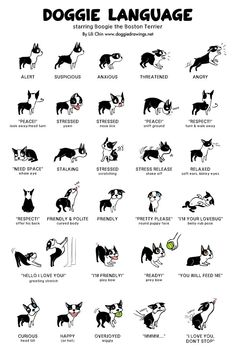 Uplifting So You Want A American Pit Bull Terrier Ideas. Fabulous So You Want A American Pit Bull Terrier Ideas. Cute Little Animals, Cute Funny Animals, Small Animals, Farm Animals, Dog Body Language, Dog Sign Language, Sign Language Alphabet, Learn Sign Language, American Sign Language