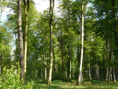 Rodion Raskolnikov @pointynosedcat #DiscoverWithBF beautiful forests in Normandy