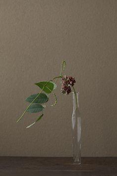 花人:川瀬敏郎  花:塊芋(ホドイモ)  器:古ガラス細瓶(20世紀)