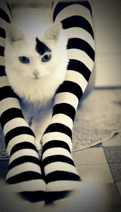 Stripes with soft cream ... Kitty luv