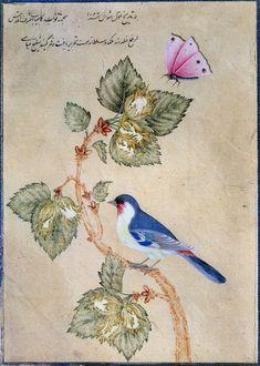 ushishir: The bird on the branch, signed Shafi Abbasi - Isphan, September 1652 Illustration Botanique, Illustration Art, Iranian Art, India Art, Islamic Art Calligraphy, Fauna, Botanical Art, Animal Paintings, Bird Art