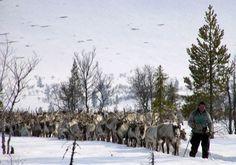 samisk kultur - Google Search