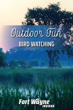 If you're interested in bird-friendly habitats, then Fort Wayne, Indiana is the place to be. Designated in 2014 as a Bird Town Indiana by the Indiana Audubon Society, Fort Wayne has met criteria that make it especially bird-friendly. Fort Wayne Indiana, Audubon Society, County Park, Urban City, Outdoor Adventures, Bird Watching, Outdoor Fun, Habitats, Places