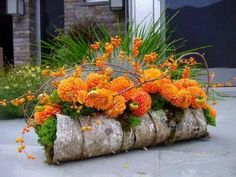 Gardening Autumn - autumn So simple on the bark with moss. The Bittersweet just makes this lovely design Pop - With the arrival of rains and falling temperatures autumn is a perfect opportunity to make new plantations Design Floral, Deco Floral, Arte Floral, Fall Flowers, Orange Flowers, Fresh Flowers, Ikebana, Art Floral Noel, Orange Centerpieces