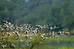 Sultanpur Bird Sanctuary: winter is the season when birds from around the world are coming to this national park. November to March is best months for this spot. Established year of the park is 1972. The distance of the park is just 50 kms from Delhi the capital of India.