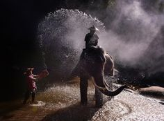 Photograph Patara Elephant farm3 by Weerapong Chaipuck on 500px