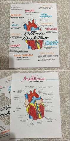 Mapa mental sistema cardiovascular / circulatório - biologia Study Biology, Biology Lessons, Science Biology, Medicine Notes, Medicine Student, School Organization Notes, Study Organization, Nursing School Notes, Science Notes