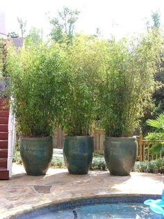 tall outdoor potted plants potted bamboo screen fascinating and low budget ideas for your best tall plants for containers tall outdoor potted plants for privacy uk
