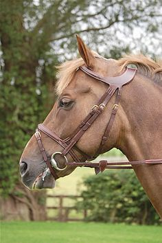 For all you bridle fanatics out there! Totally drool worthy Dyon bridle!