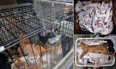 Tons of cats are butchered and sold to restaurants by 'animal lover'
