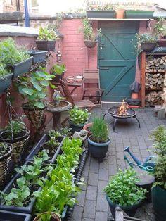 Veg Growing in a small space from Vertical Veg Small space gardening, Garden, Courtyard garden, Vege Small Courtyard Gardens, Small Courtyards, Small Gardens, Outdoor Gardens, Small Space Gardening, Small Garden Design, Garden Spaces, Balcony Garden, Garden Sofa