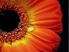 Macro photography creates a whole new world that's not normally seen.
