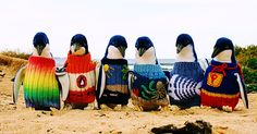 At 109 years old, Australia's oldest man is making a difference for Phillip Island's little penguin population! The penguins, who were affected by an oil spill and in danger of dying from starvation and exposure, were in desperate need of some homemade sweaters. Alfie Date put his 86 years of knitting experience to the task.