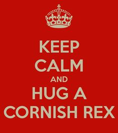 Keep calm and hug a cornish rex :)