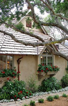 Just love the way the tree branches look against the roof line…