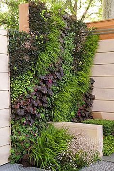 Is this incredible or what? Living wall; the side of the patio - privacy and shade. One side - sedums, the other side faces the patio - add color.