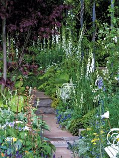 "English garden designers, such as Vita Sackville-West, Geoffrey Jellicoe, and Charles Wade; also, use plants such as river birch, White foxglove, Japanese forest grass, 'Sum and Substance' hosta, Shirley Blue speedwell, Duchesse de Nemours peony, Golden columbine, 'Royal Standard' hosta, Moonshine yarrow, Five-leaf akebia, ""Patricia"" geranium"