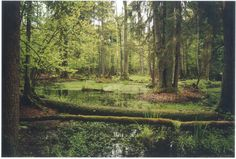 "Bialowieza Forest, Poland. One of the last remaining primeval forests in Europe, and the former hunting grounds of Russian nobility. I've been obsessed with going here ever since I read about it in ""The World Without Us"" by Alan Weisman."