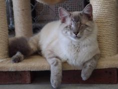 Blind Cat Rescue is a life time care sanctuary for blind, FIV & leukemia positive cats - Sterling