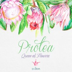 Protea Queen of Flowers Wedding Watercolor Flowers and leaves handpainted clipart invite greeting card DIY invitations flowers frame Watercolor Wedding, Watercolor Cards, Watercolor Flowers, Protea Art, Protea Flower, Flower Bar, Flower Frame, Diy Flowers, Vintage Flowers