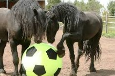 """""""Hey, lets play some futball man"""" -- Google search 'friesian'"""